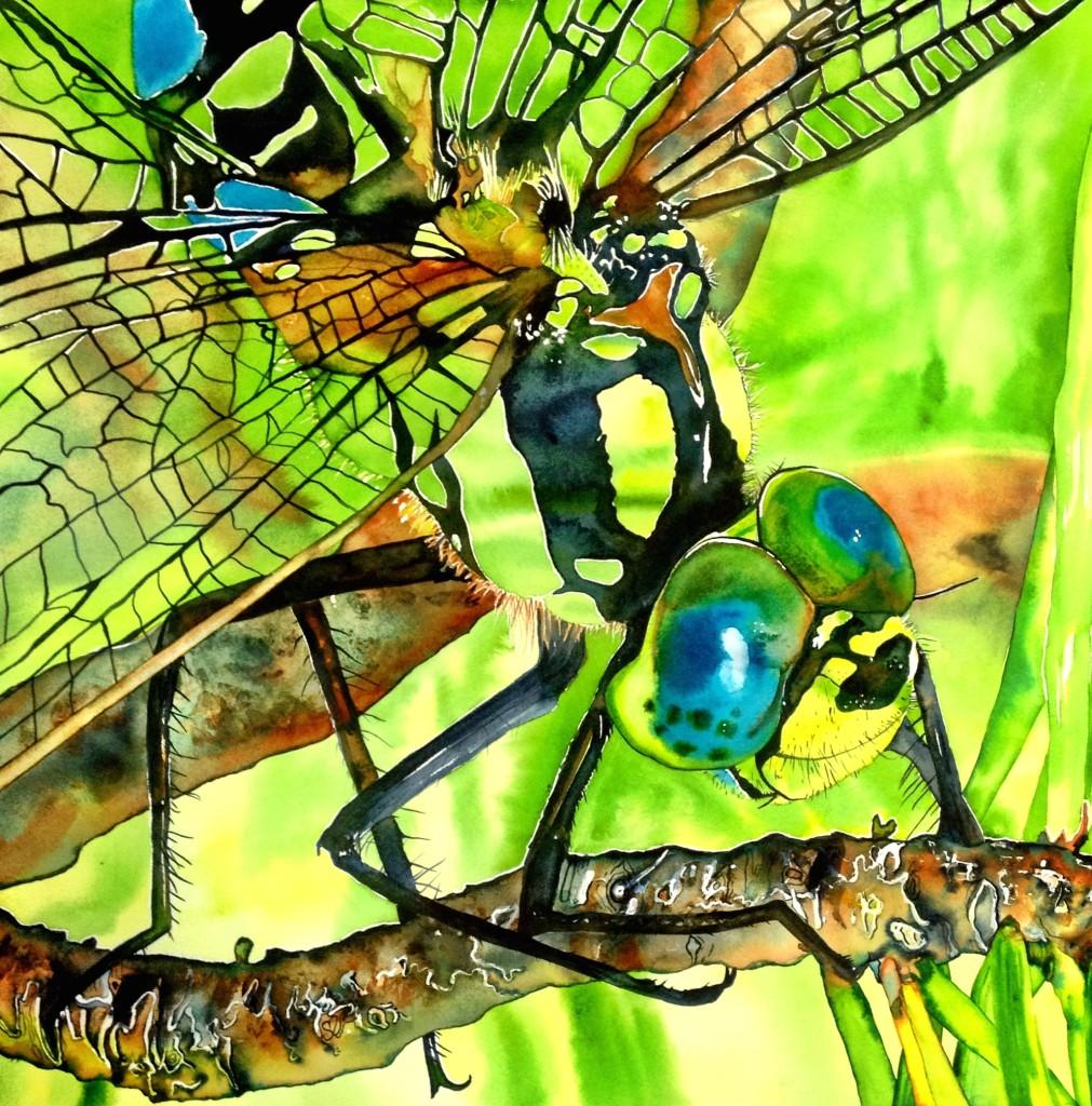 Dragonfly on a Limb